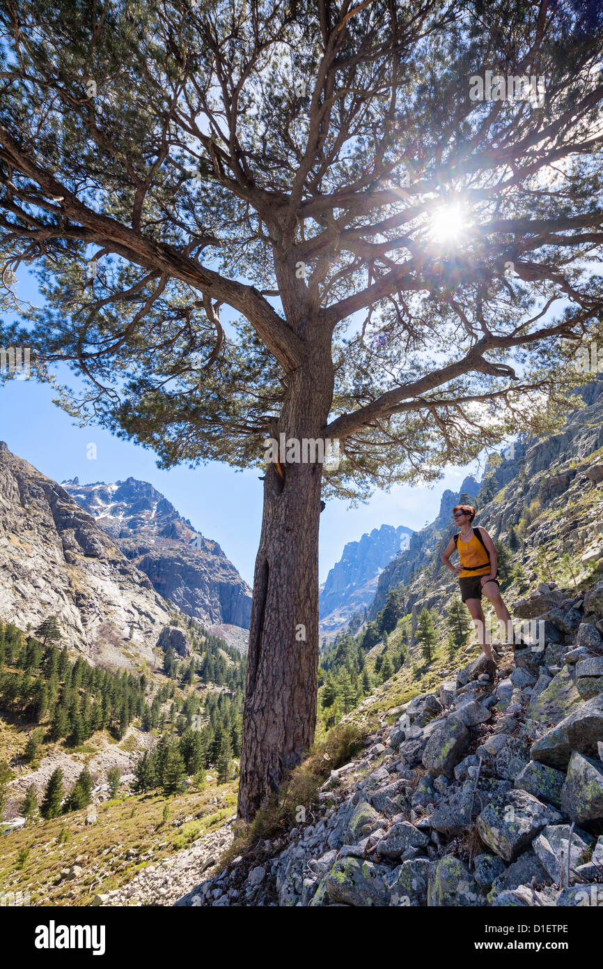 Woman next to pine tree in the Restonica Valley, Corsica, France - Stock Image
