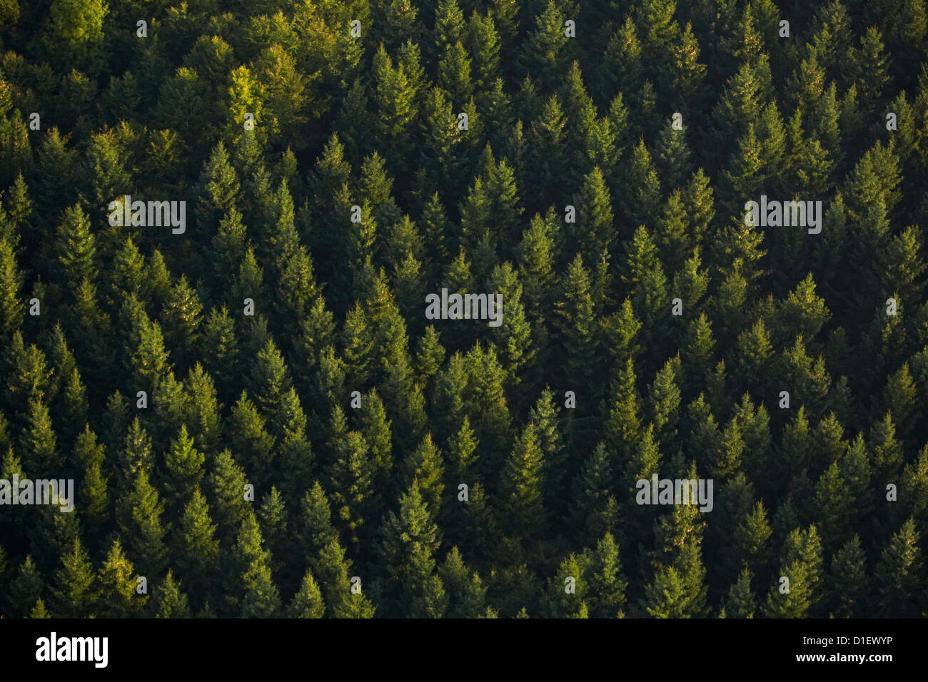 Conifer forest near Sigmaringen, Baden-Wuerttemberg, Germany, aerial photo - Stock Image
