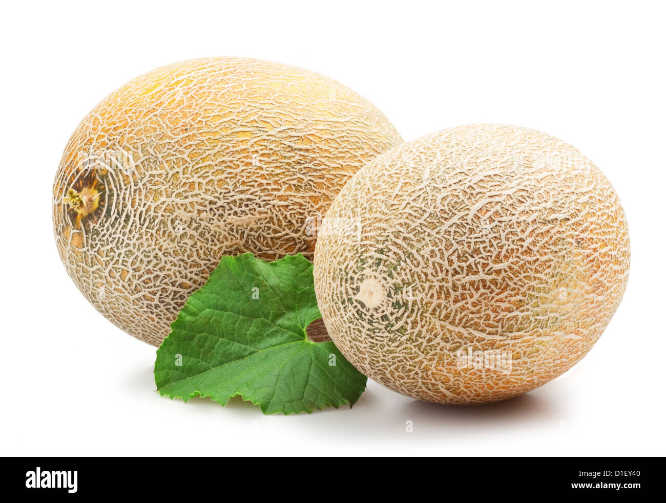 Ripe Melon On White Background Stock Photo Alamy The stem end of the melon should have a slight give, and. https www alamy com stock photo ripe melon on white background 52574368 html