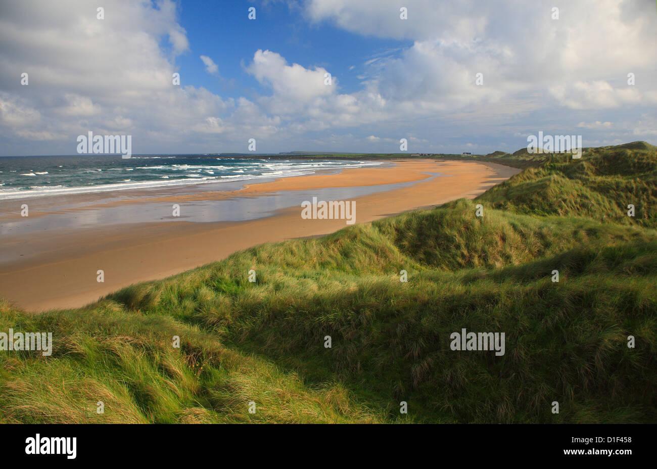 Dunes covered in maram grass, deserted sandy beach. - Stock Image