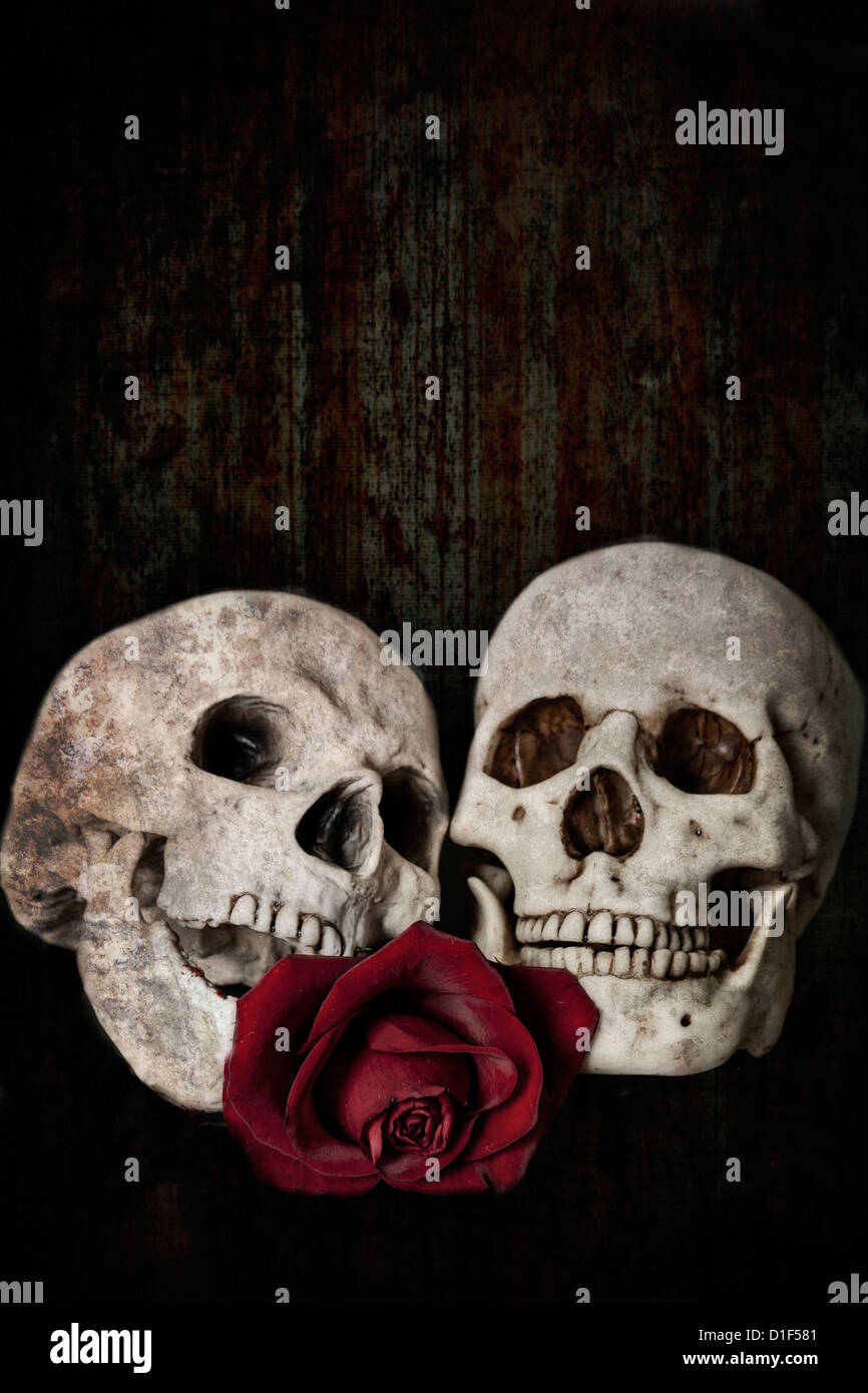 two skulls, combined forever in eternal love, with a red rose - Stock Image
