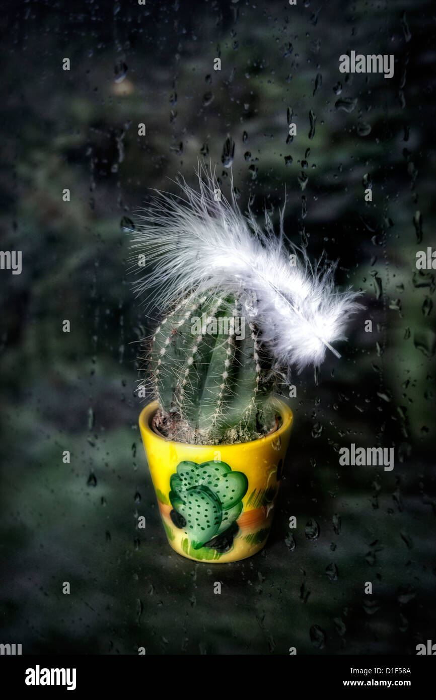 a cactus in a plant pot with a white feather behind a window with rain drops - Stock Image