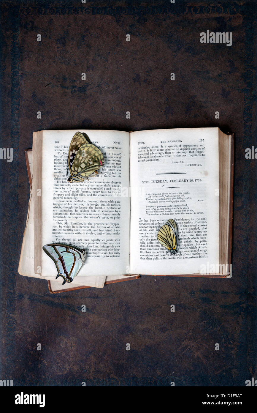 three dead butterflies on an old book - Stock Image