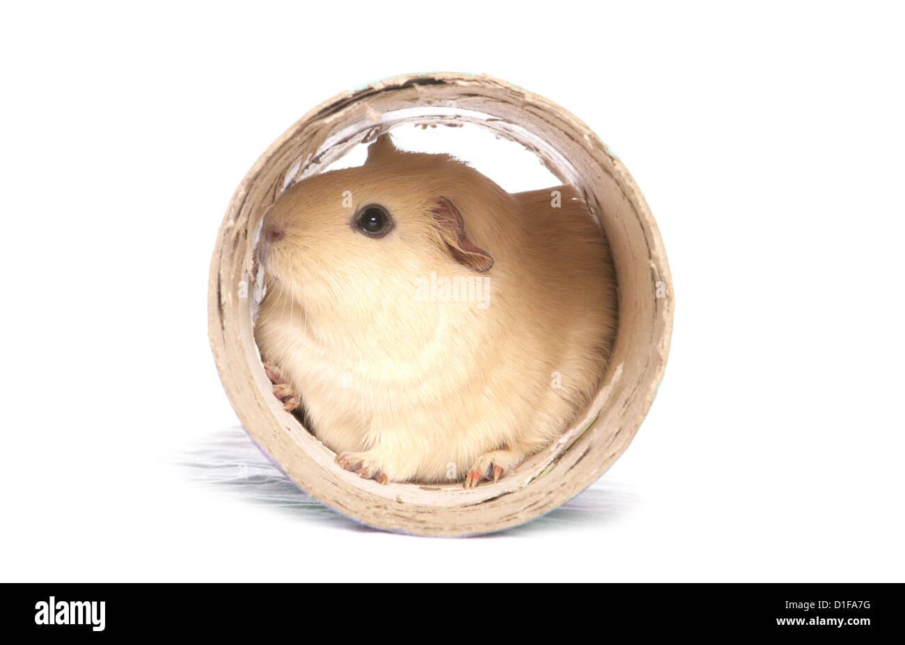 hamster adult tube free iphone porn milf