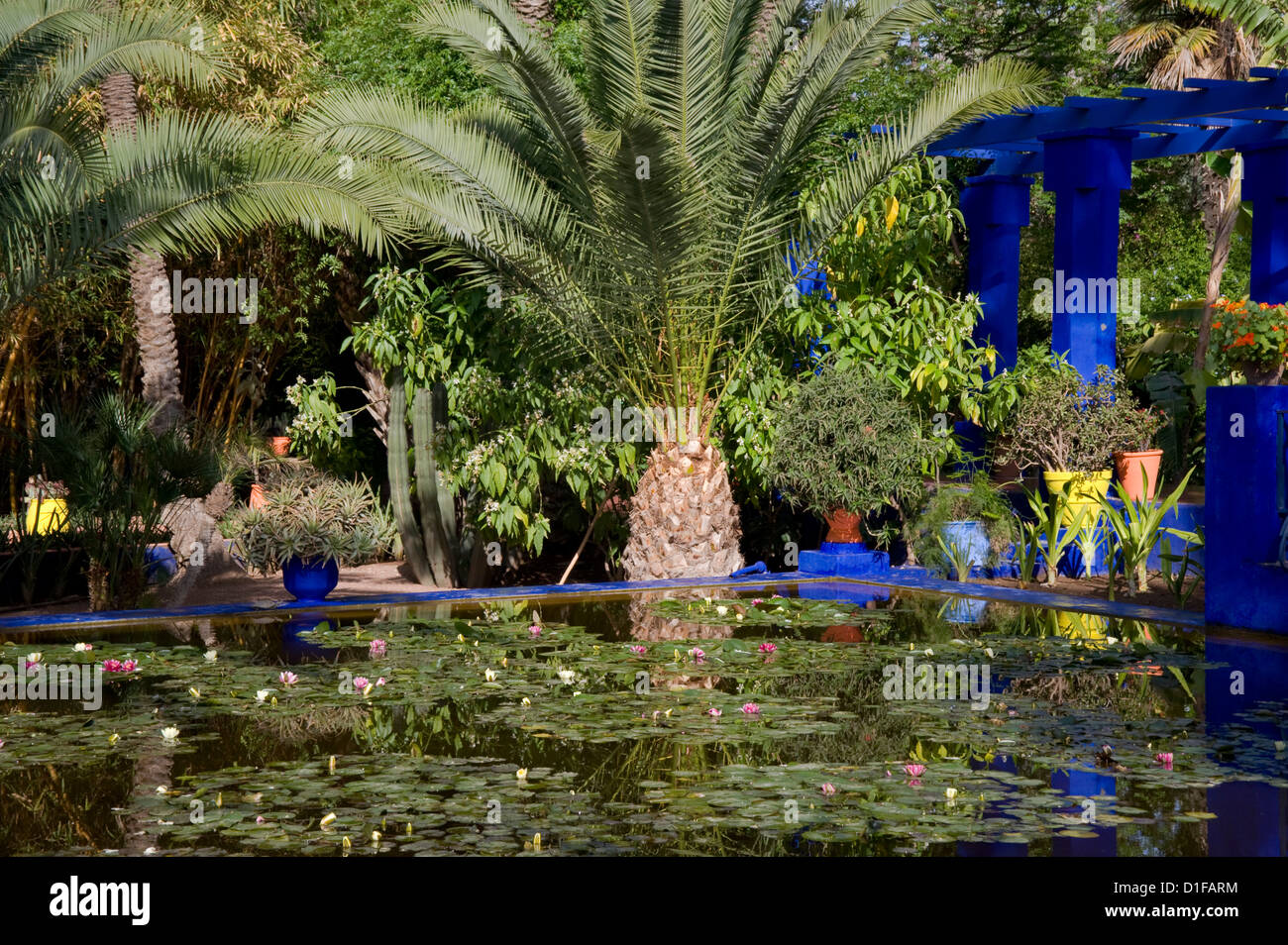 Tropical palms surrounding an pond containing water lilies at the Majorelle Garden in Marrakech, Morocco, North - Stock Image