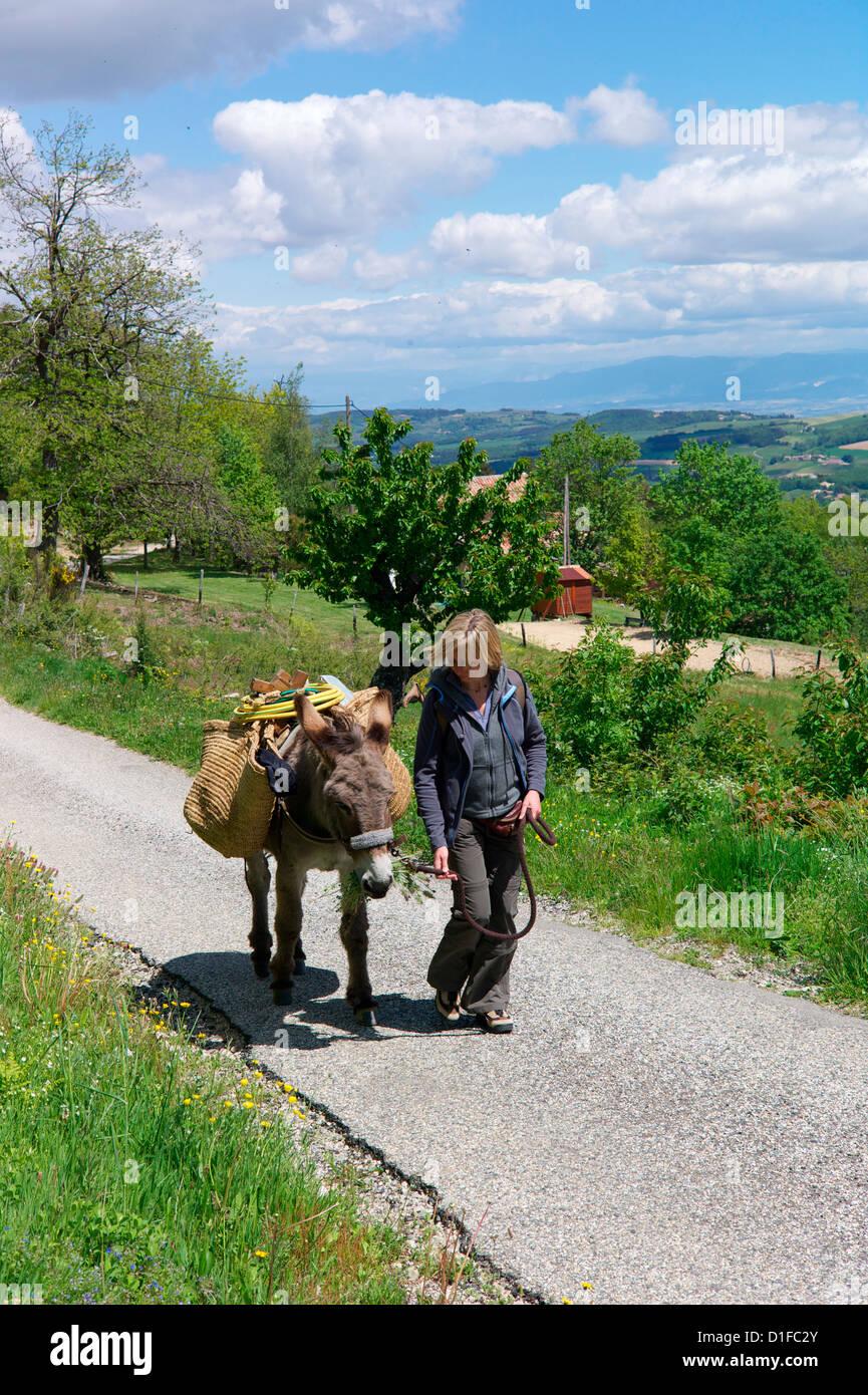 Donkey trekking in the Ardeche, France, Europe - Stock Image