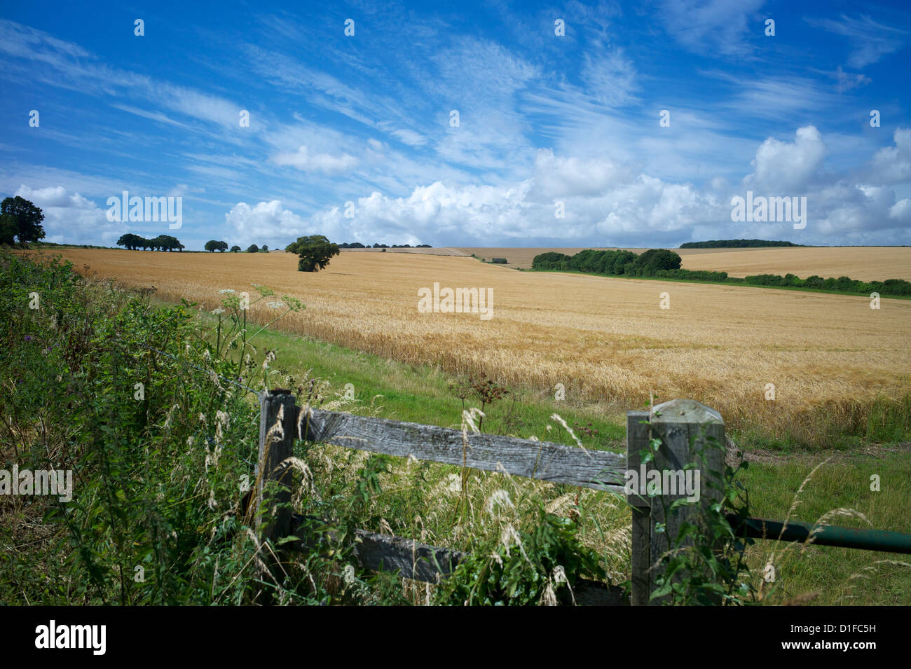 The South Downs Way, Hampshire, England, United Kingdom, Europe - Stock Image