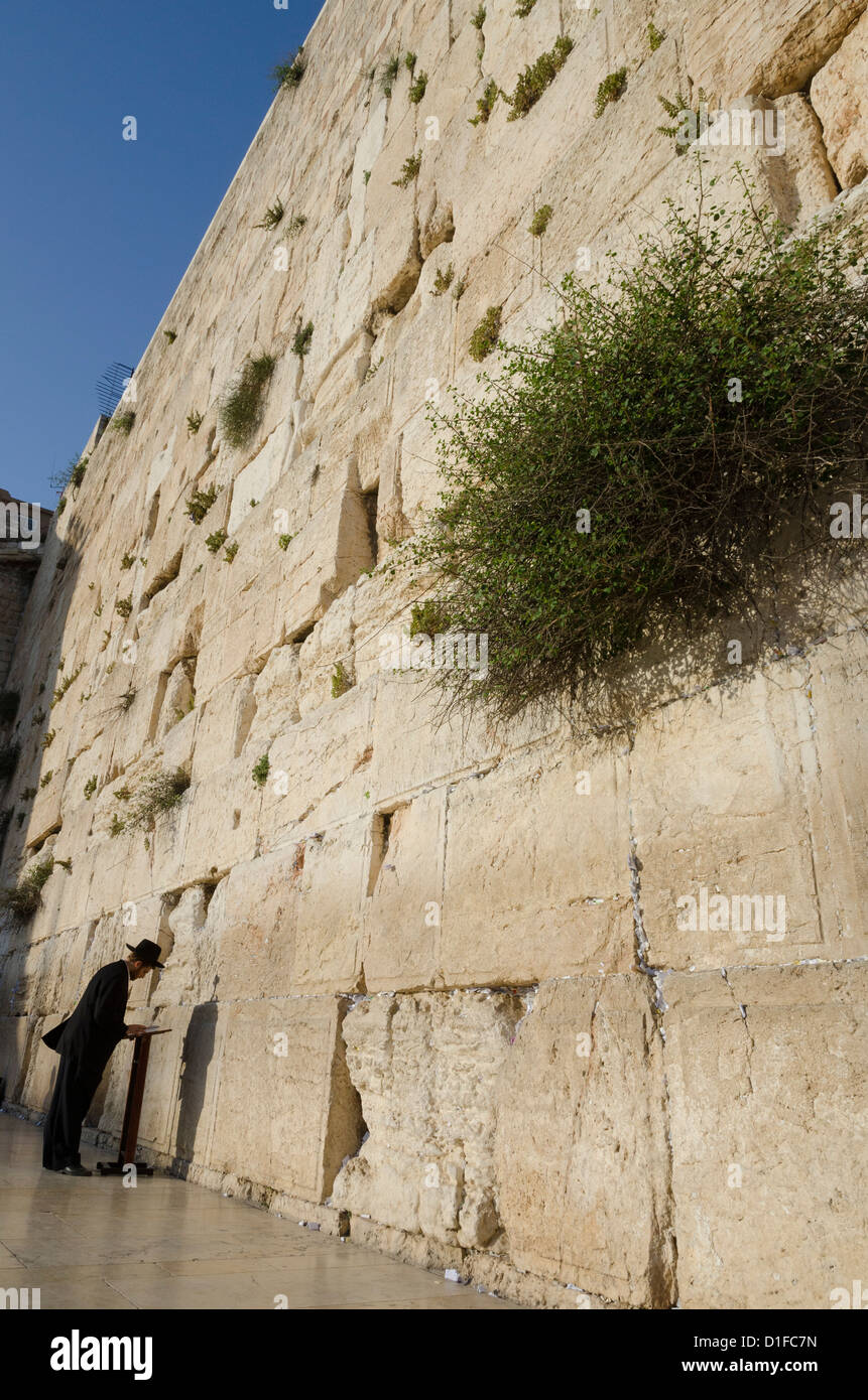 Orthodox Jew praying at the Western Wall, Old City, Jerusalem, Israel, Middle East - Stock Image