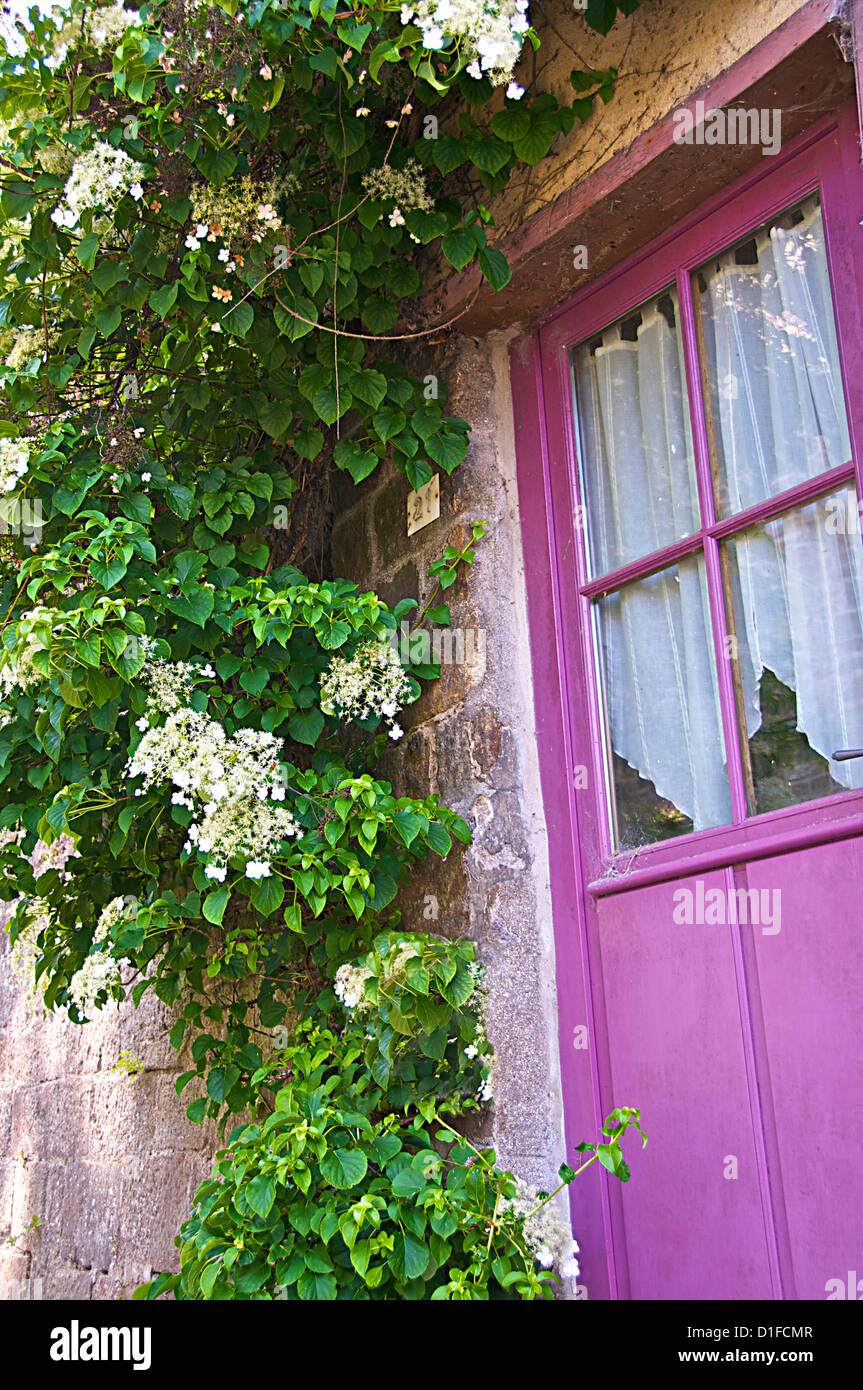 Beautiful mauve painted door with flowering creeper plant, Dinan, Brittany, Cotes d'Armor, France, Europe - Stock Image