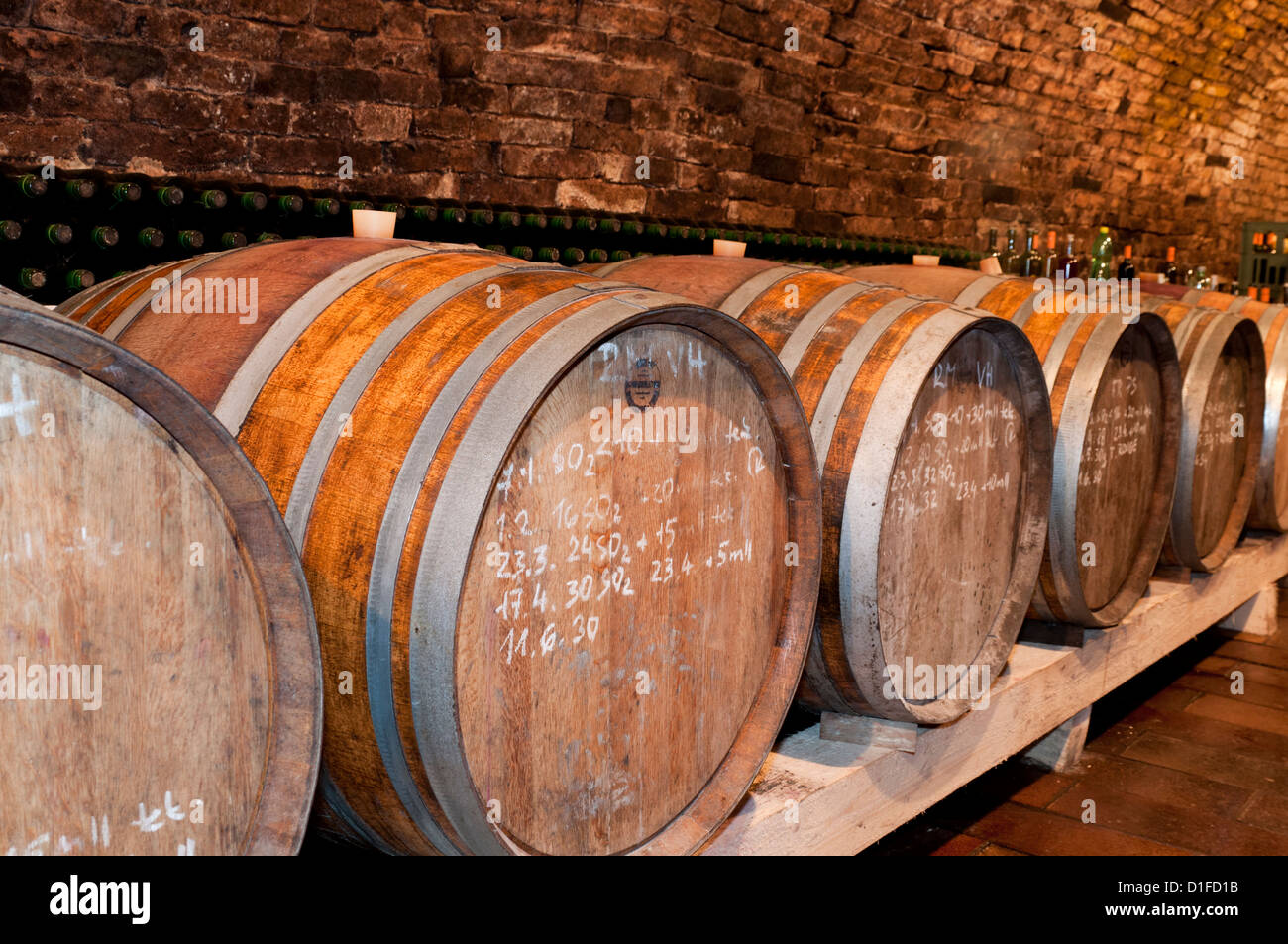 Wooden wine barrels and mould on walls of wine cellar of winemaker Petr Marada, village of Mikulcice, Brnensko, - Stock Image