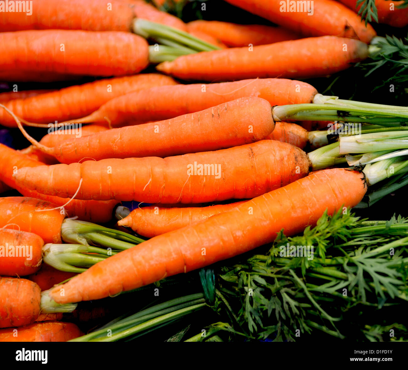 FRESH ORGANIC CARROTS WITH GREEN TOPS - Stock Image