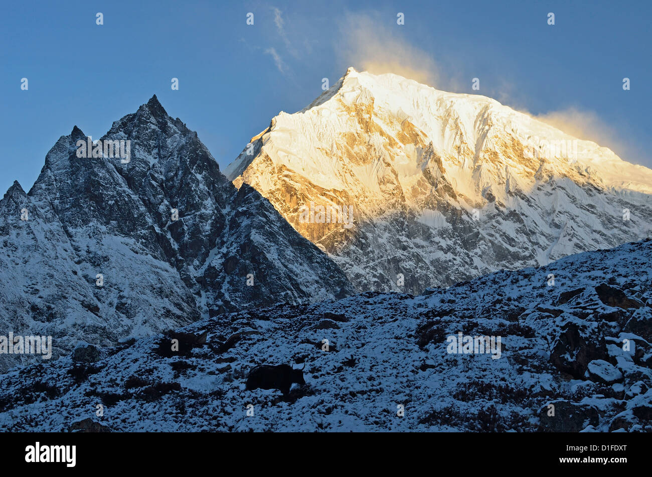Yak and Langtang Lirung at sunrise, Langtang National Park, Bagmati, Central Region (Madhyamanchal), Nepal, Himalayas, - Stock Image