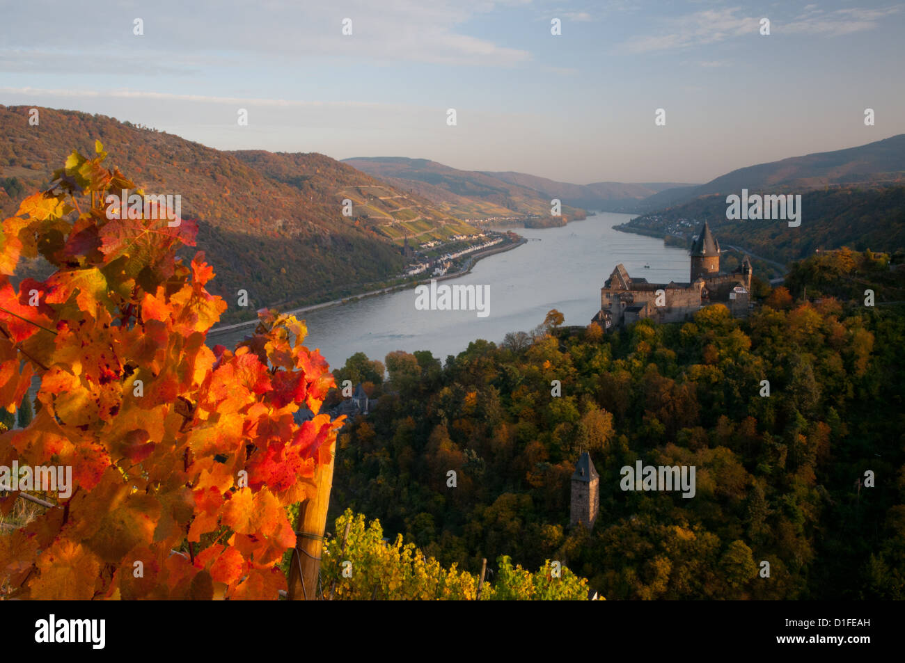 Autumn vines at Burg Stahleck Rhine castle, Bacharach, Rhineland, Germany - Stock Image