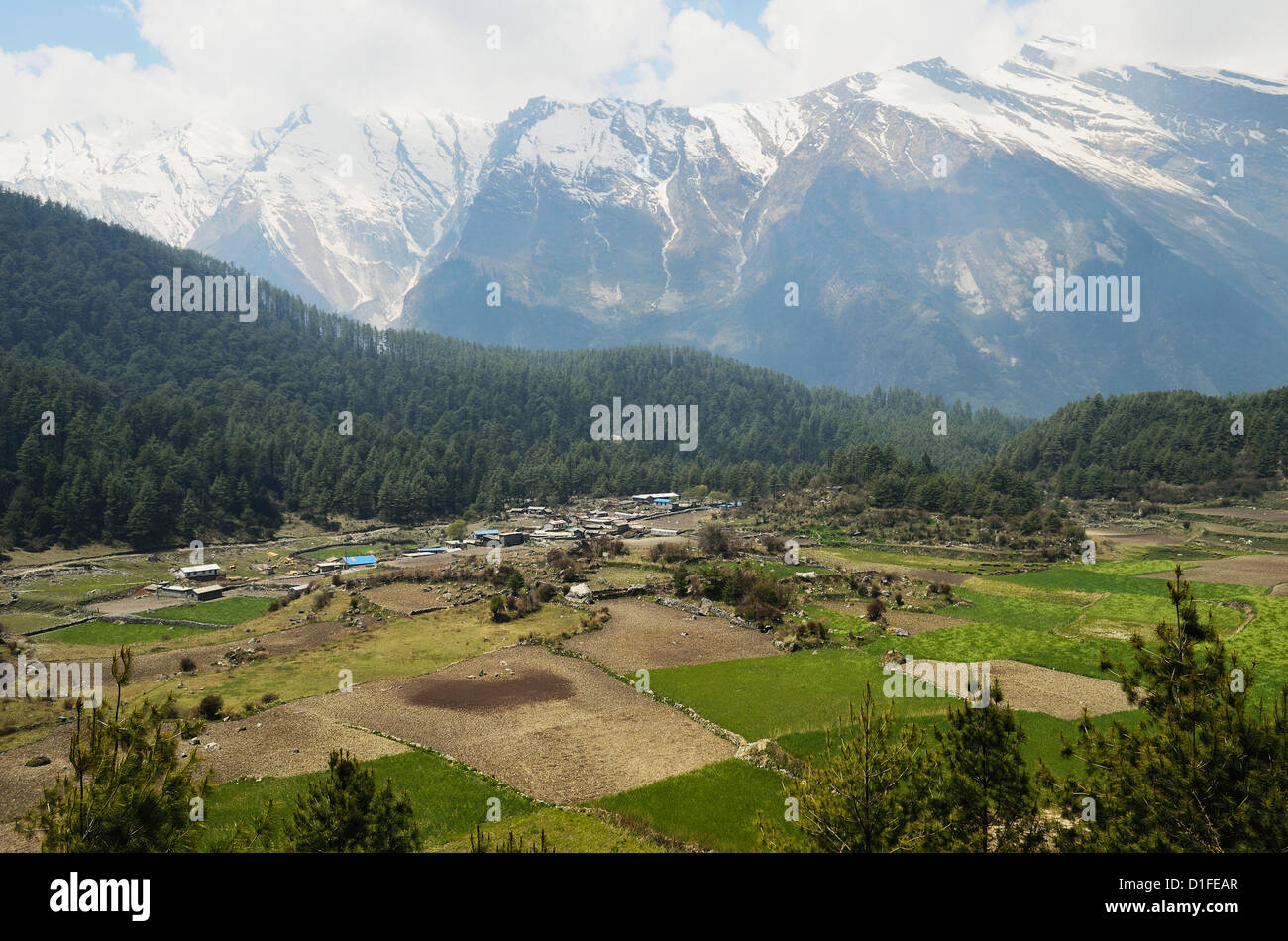 Dhaulagiri Himal seen from Titi, Annapurna Conservation Area, Dhawalagiri (Dhaulagiri), Western Region (Pashchimanchal), - Stock Image