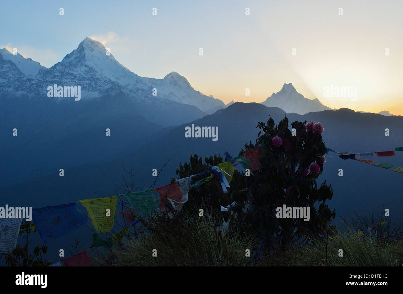 Annapurna Range seen from Poon Hill, Annapurna Conservation Area, Dhawalagiri, Western Region (Pashchimanchal), - Stock Image