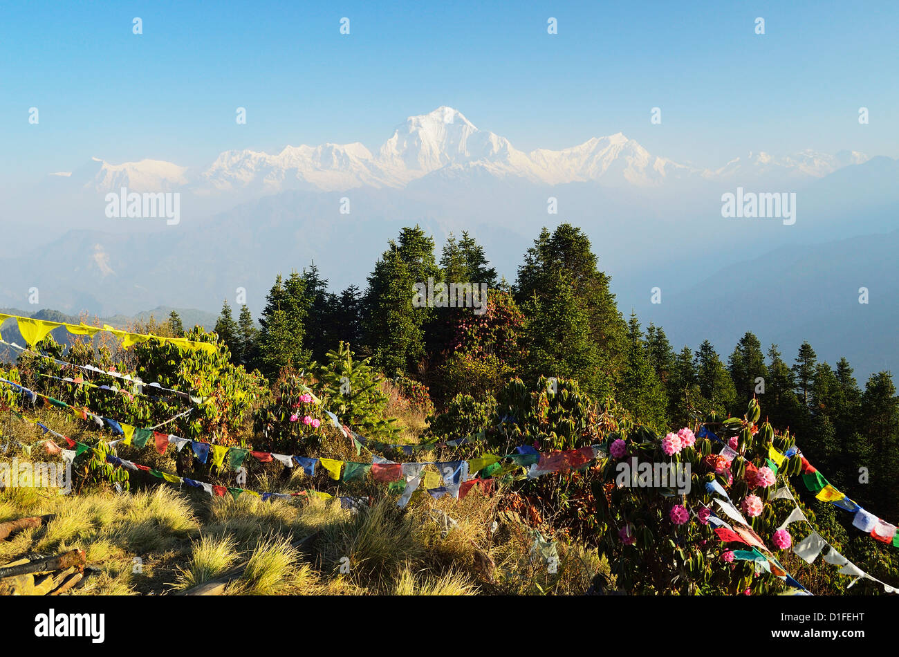 Dhaulagiri Himal seen from Poon Hill, Annapurna Conservation Area, Dhawalagiri (Dhaulagiri), Western Region, Nepal - Stock Image