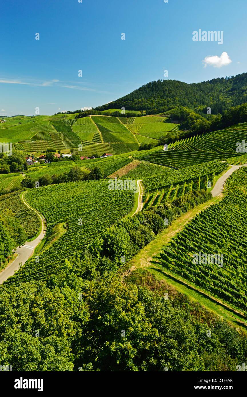 Vineyards, Ortenberg, Ortenau, Baden-Wurttemberg, Germany, Europe - Stock Image