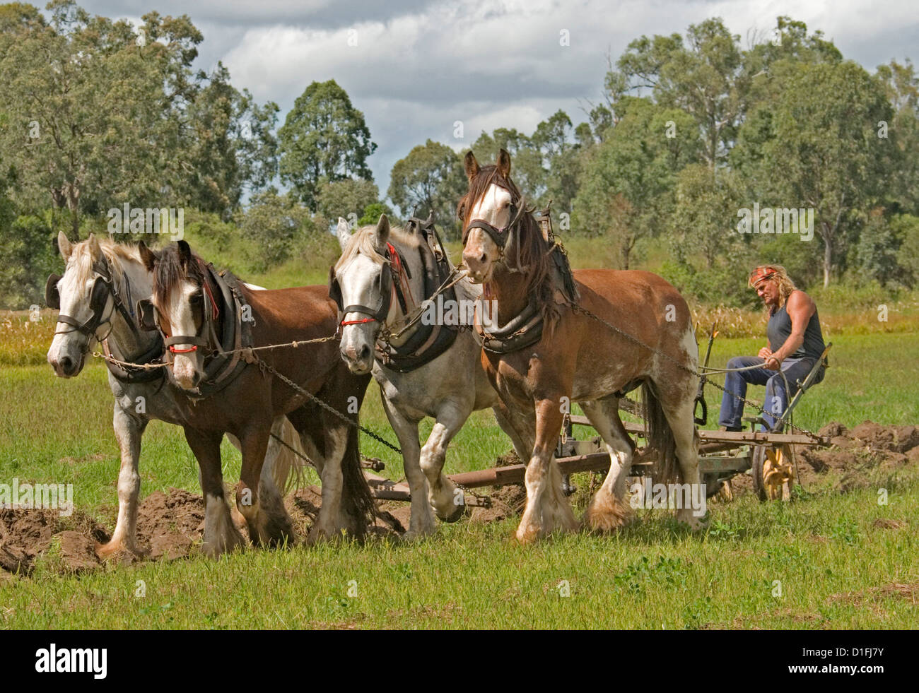 Team of four draft horses ploughing on a farm - Stock Image
