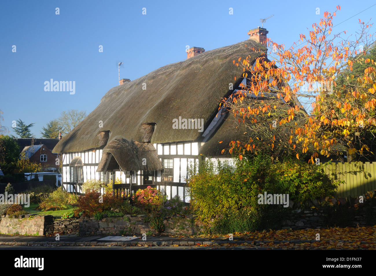 16th or 17th c. thatched cottage, named simply 'The Thatch', in Cropston, Leicestershire, England - Stock Image