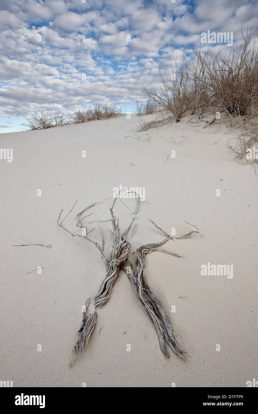 Twigs on the dunes, White Sands National Monument, New Mexico, United States of America, North America - Stock Image