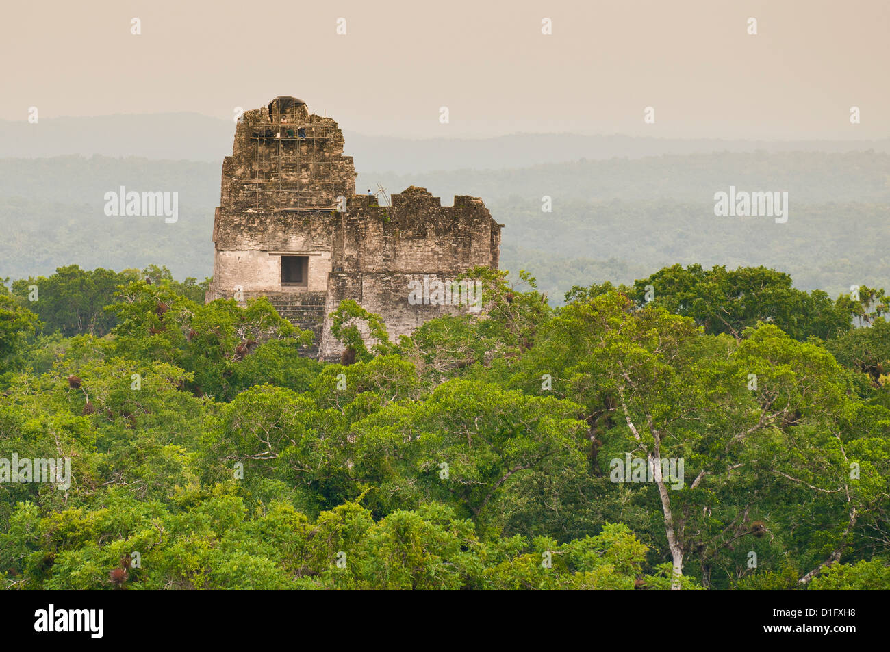 Tikal National Park (Parque Nacional Tikal), UNESCO World Heritage Site, Guatemala, Central America - Stock Image