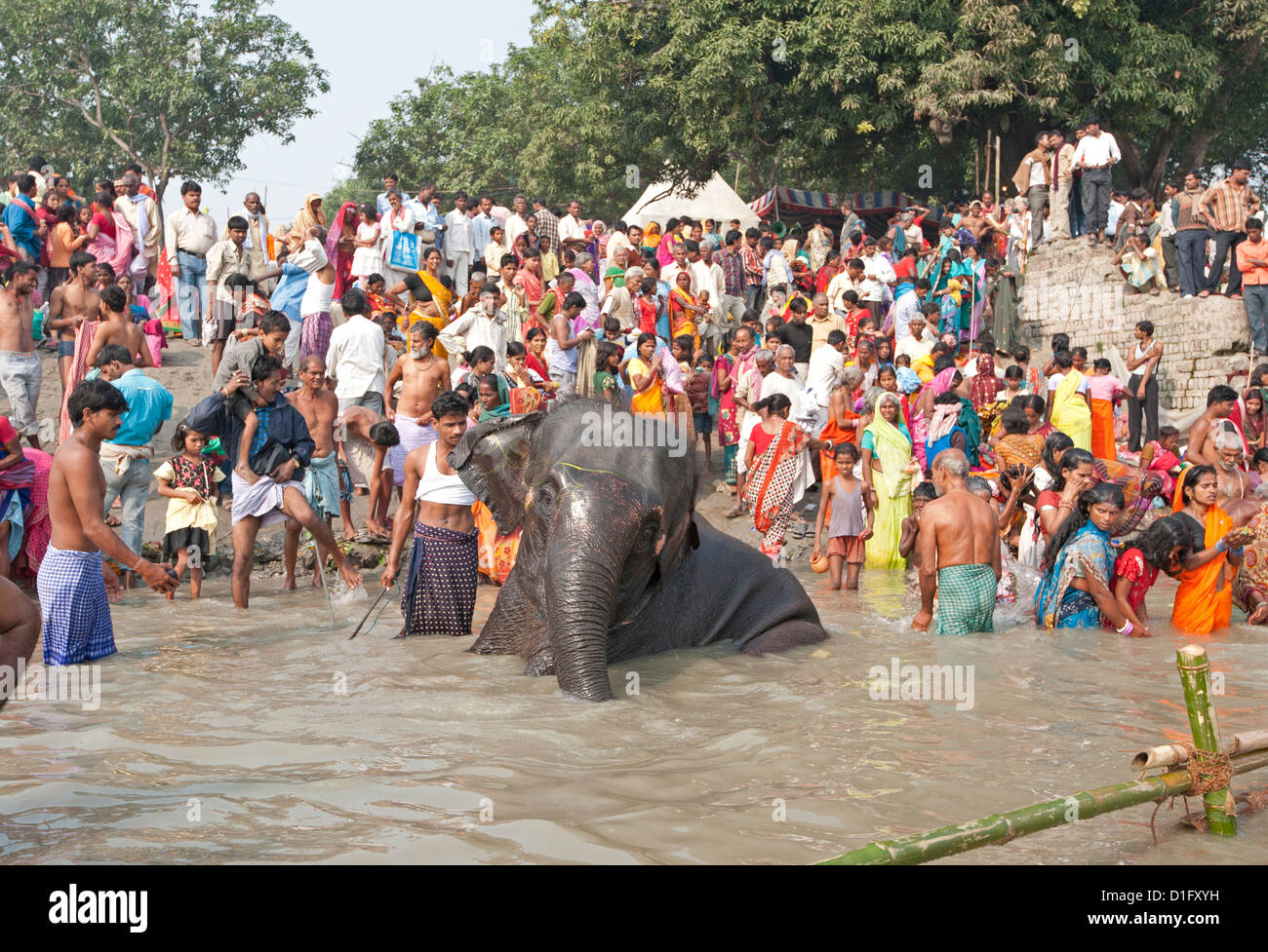 Elephant being washed near the banks of the River Ganges crowded with visitors to the Sonepur Cattle Fair, Bihar, - Stock Image