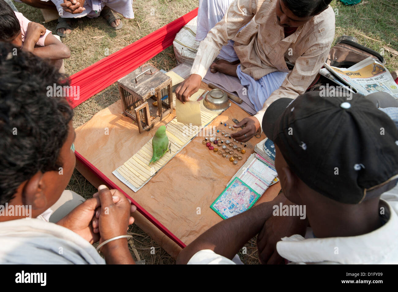 Fortune telling green parakeet being used to pick tarot cards at Sonepur Cattle Fair, Bihar, India, Asia - Stock Image