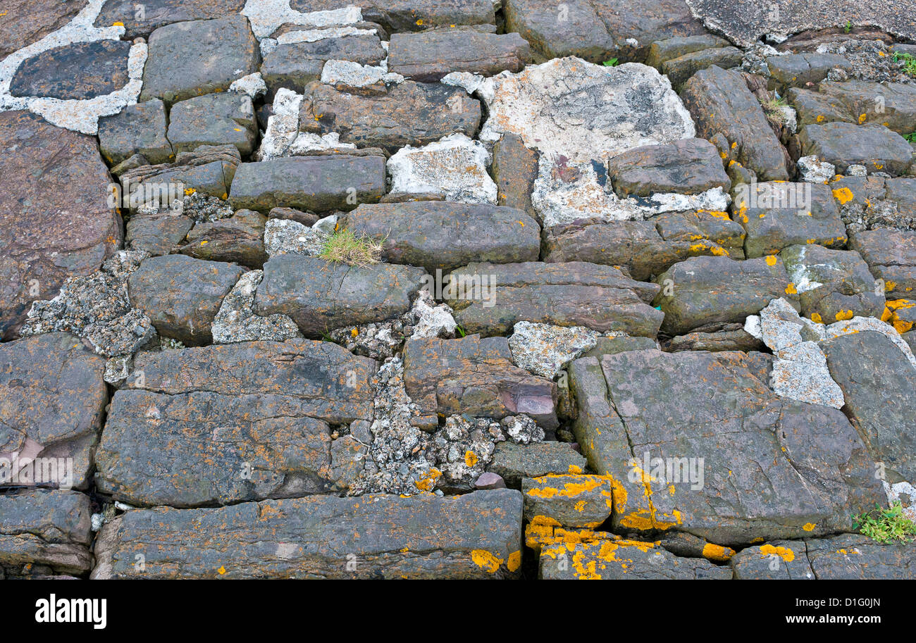 Broken drystone pavement, repaired with concrete, with tufts of grass and orange algae. - Stock Image