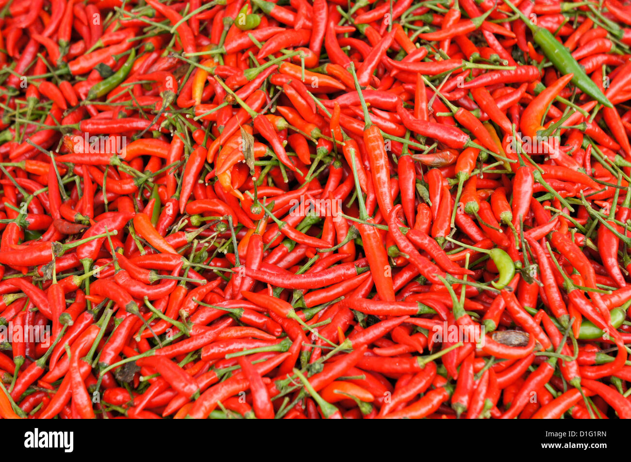 Birds eye chilli or cili padi at market in kuching malaysia stock birds eye chilli or cili padi at market in kuching malaysia altavistaventures Images