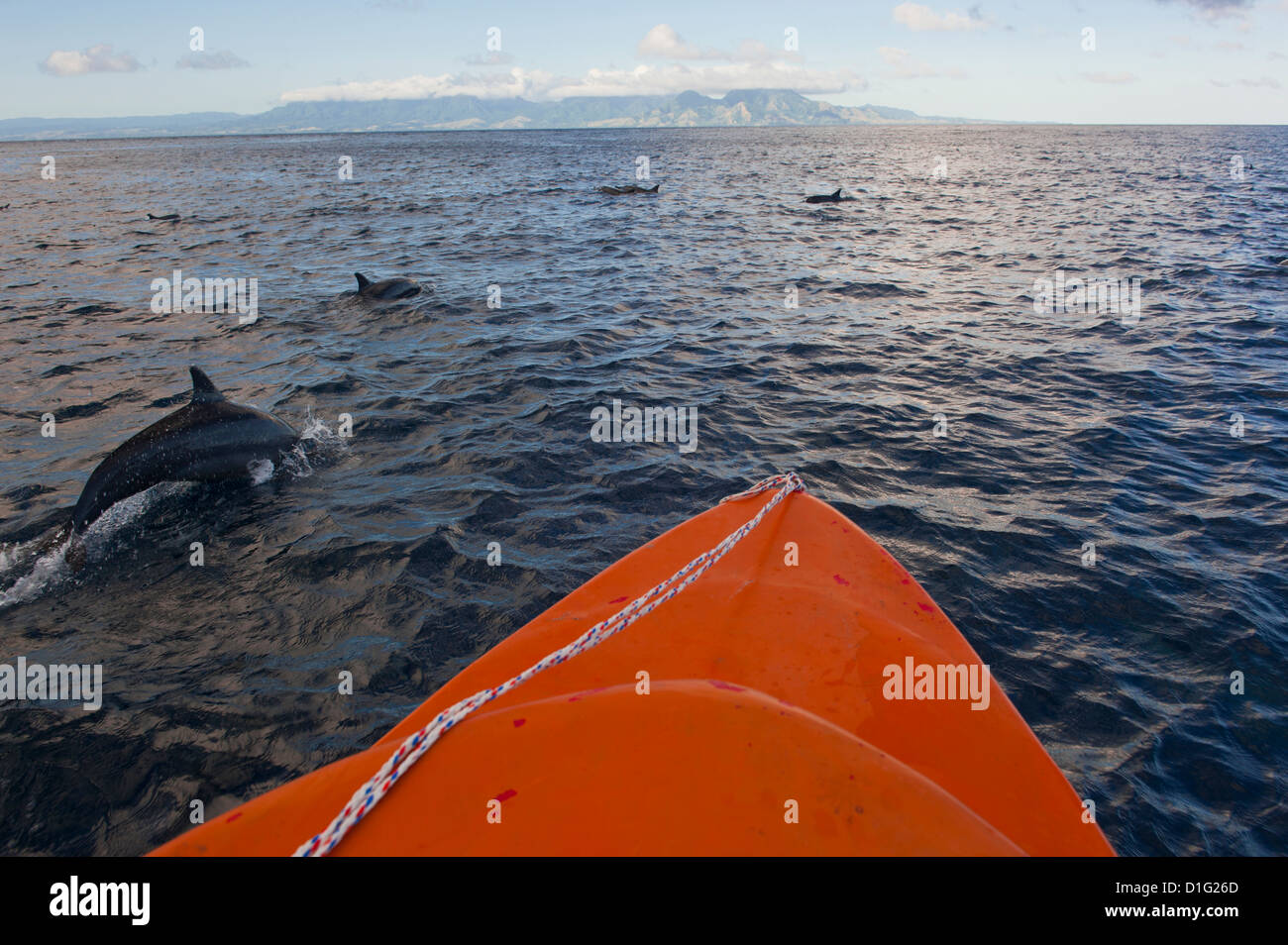Dolphins swimming with a boat, Savo Island, Solomon Islands, Pacific - Stock Image