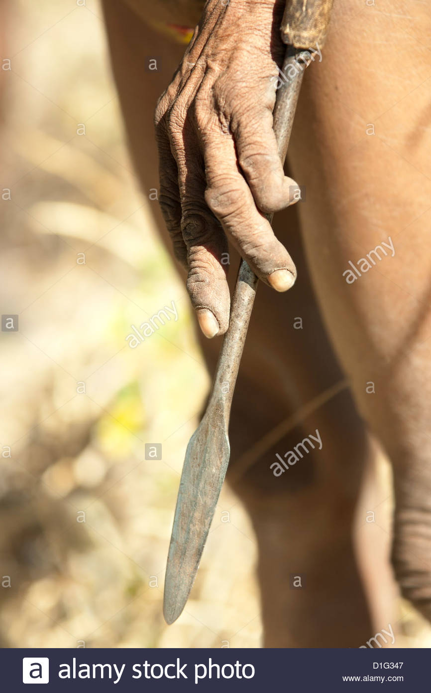 Hand of a Jul'hoan !Kung Bushman on a hunt holding his spear, Bushmanland, Kalahari Desert, Namibia, Africa - Stock Image