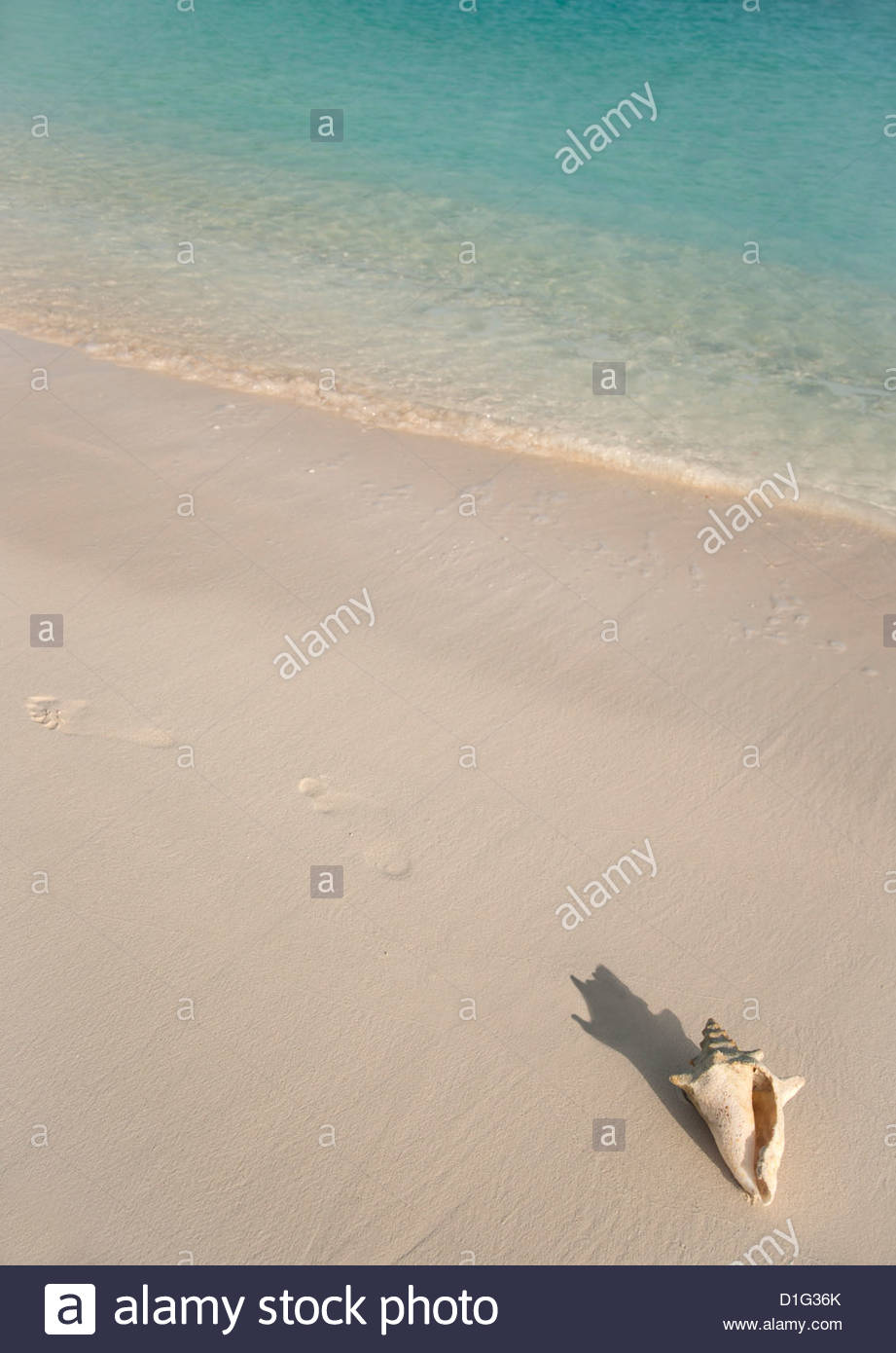 Conch shell on Grace Bay Beach, Providenciales, Turks and Caicos Islands, West Indies, Caribbean, Central America - Stock Image