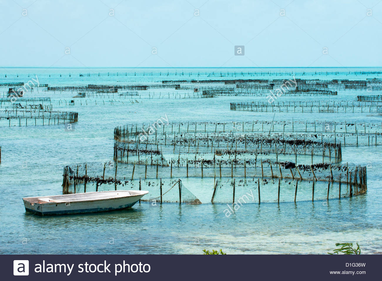 Off-shore ponds, Conch farm, Providenciales, Caicos, Turks and Caicos Islands, West Indies, Caribbean, Central America - Stock Image
