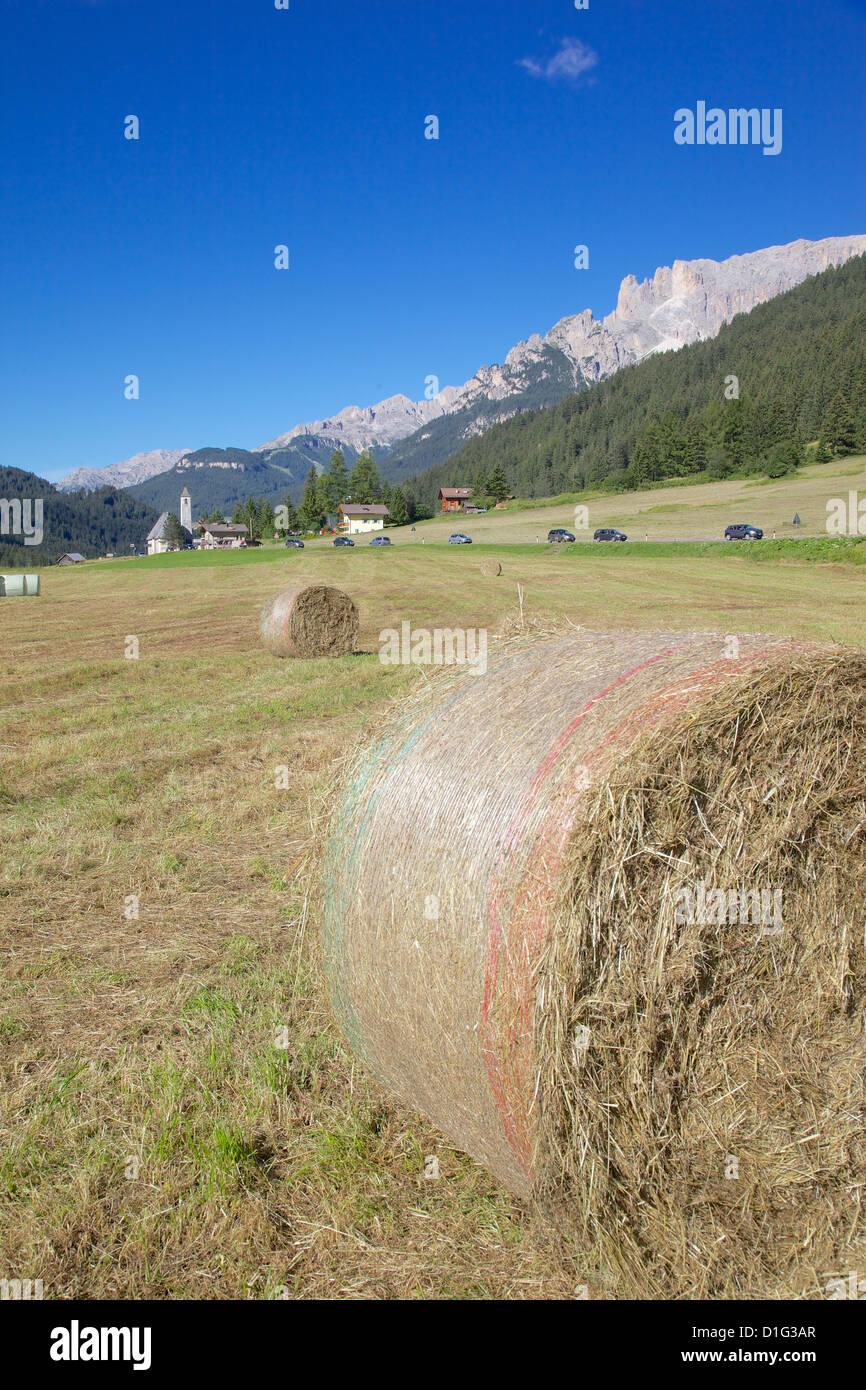 Hay field near Canazei, Canazei, Trentino-Alto Adige, Italy, Europe - Stock Image
