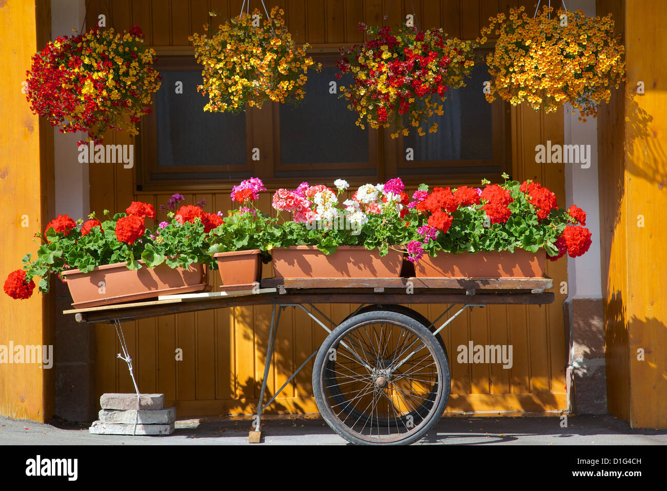 Flowers on trolley, Arabba, Belluno Province, Trento, Italy, Europe - Stock Image