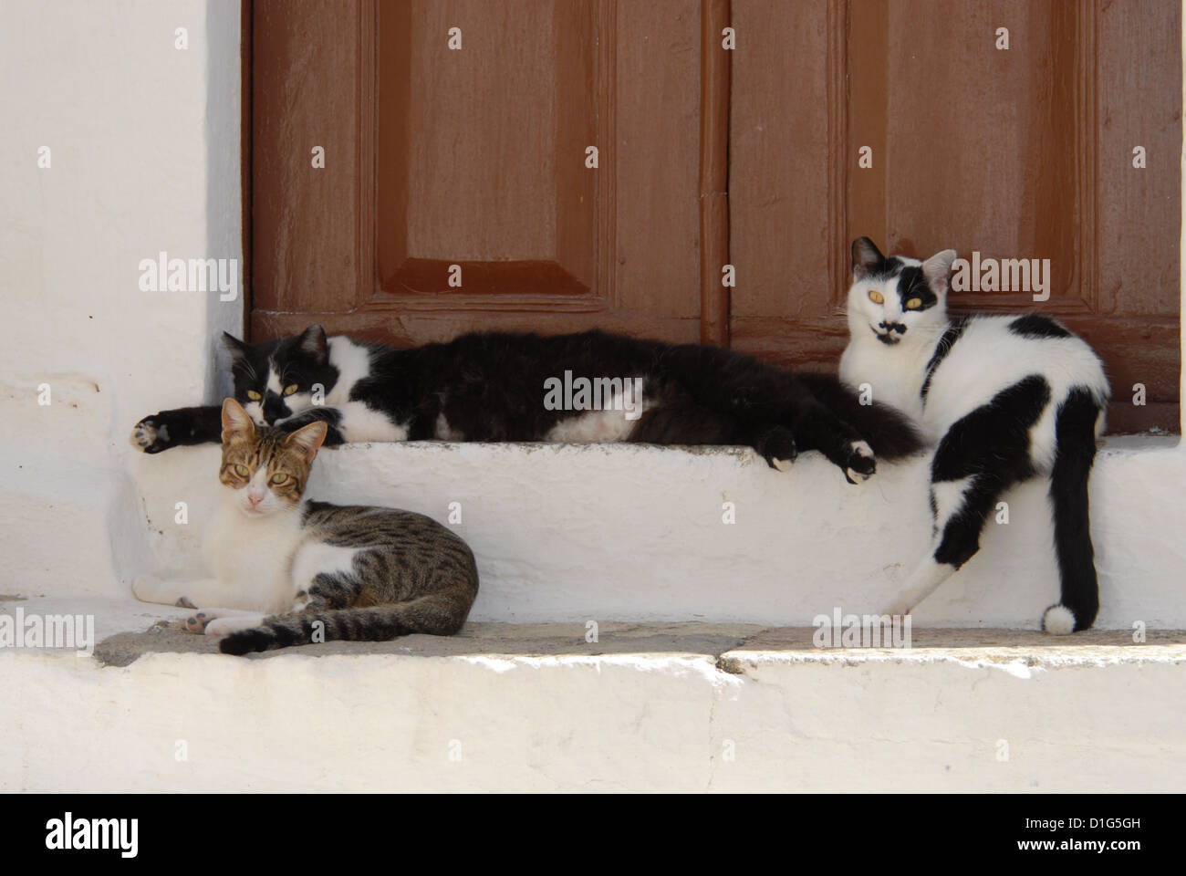 three cats, resting side by side on a threshold, Greece, Dodecanese Island, Non-pedigree Shorthair, felis silvestris - Stock Image