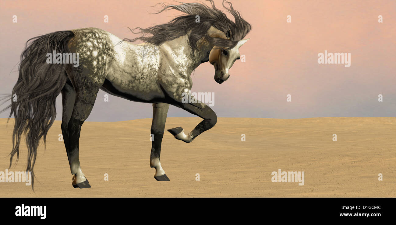 Arabian Horses Desert High Resolution Stock Photography And Images Alamy