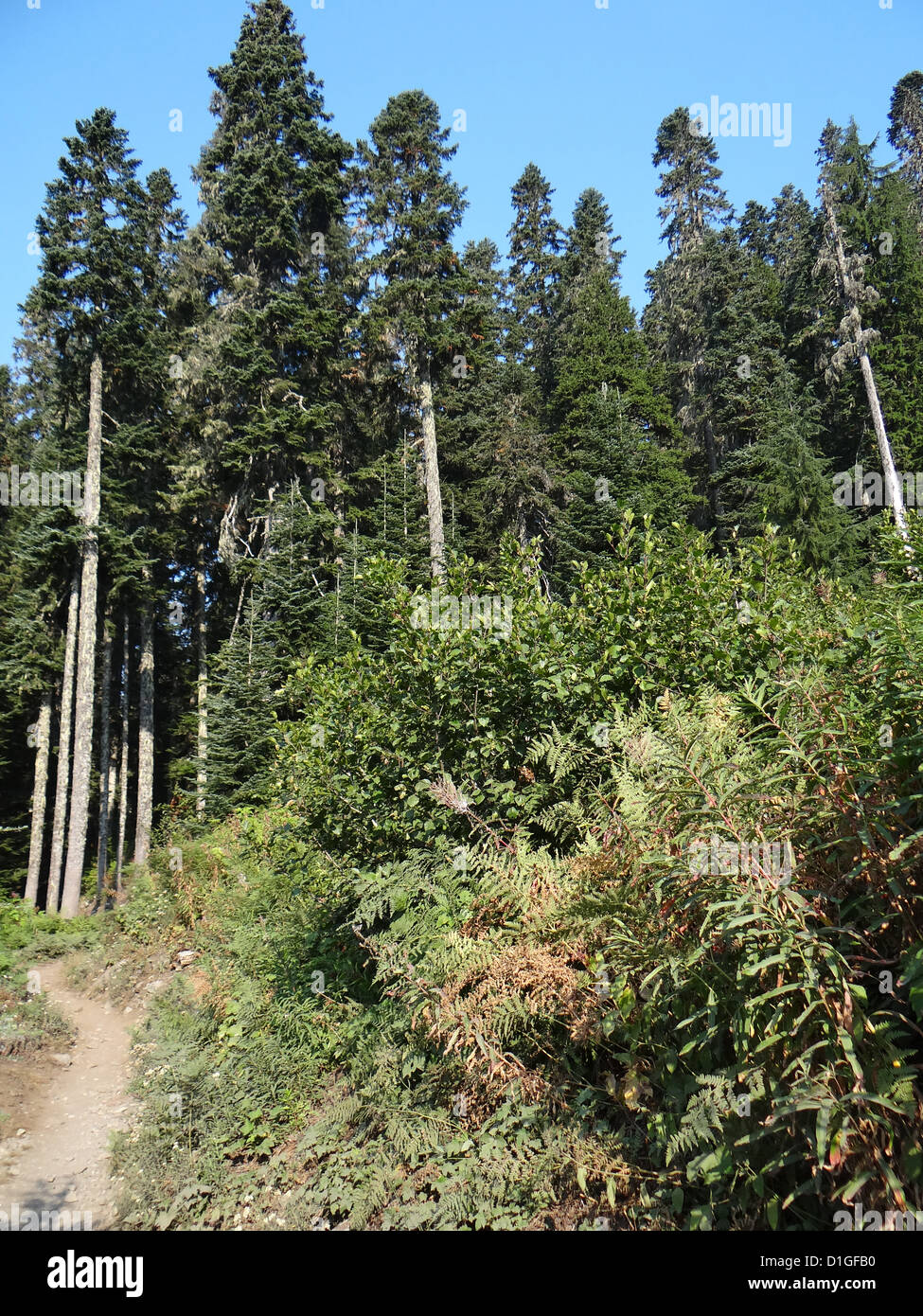Trail along a forested ridge near Snoqualmie Pass, Washington  - Stock Image