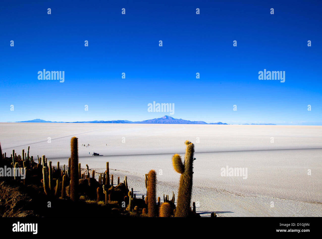 Cacti on Isla de los Pescadores, Volcan Tunupa and the salt flats, Salar de Uyuni, Southwest Highlands, Bolivia, - Stock Image
