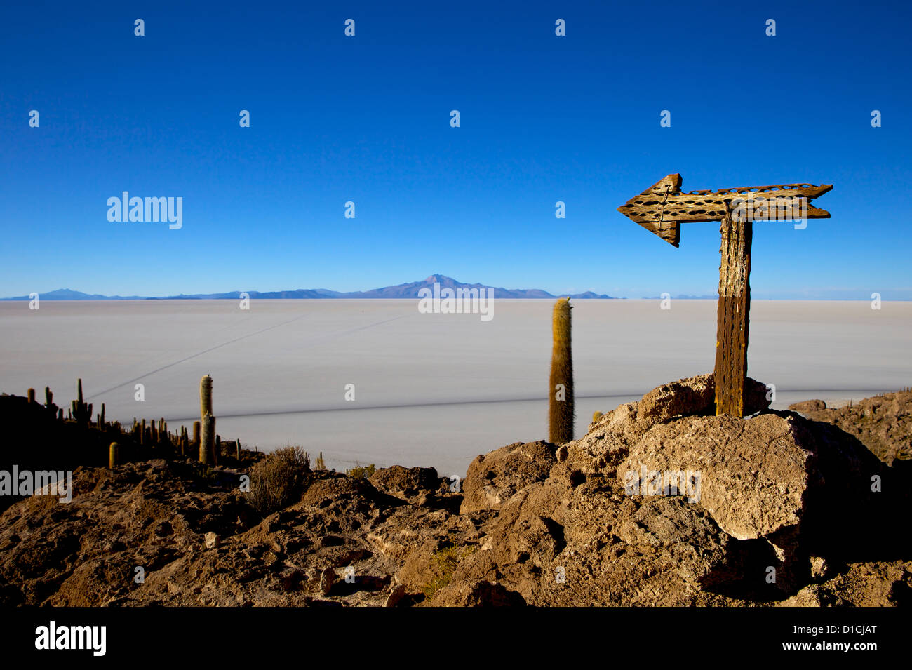Cactus arrow on Isla de los Pescadores, Volcan Tunupa and the salt flats, Salar de Uyuni, Southwest Highlands, Bolivia - Stock Image