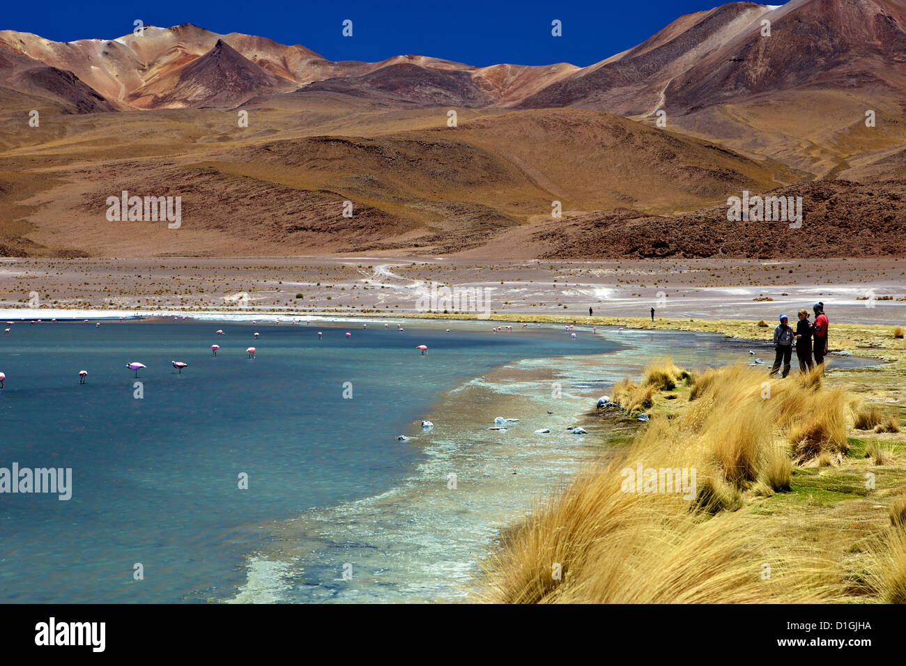 Laguna Canapa, South Lipez, Southwest Highlands, Bolivia, South America - Stock Image