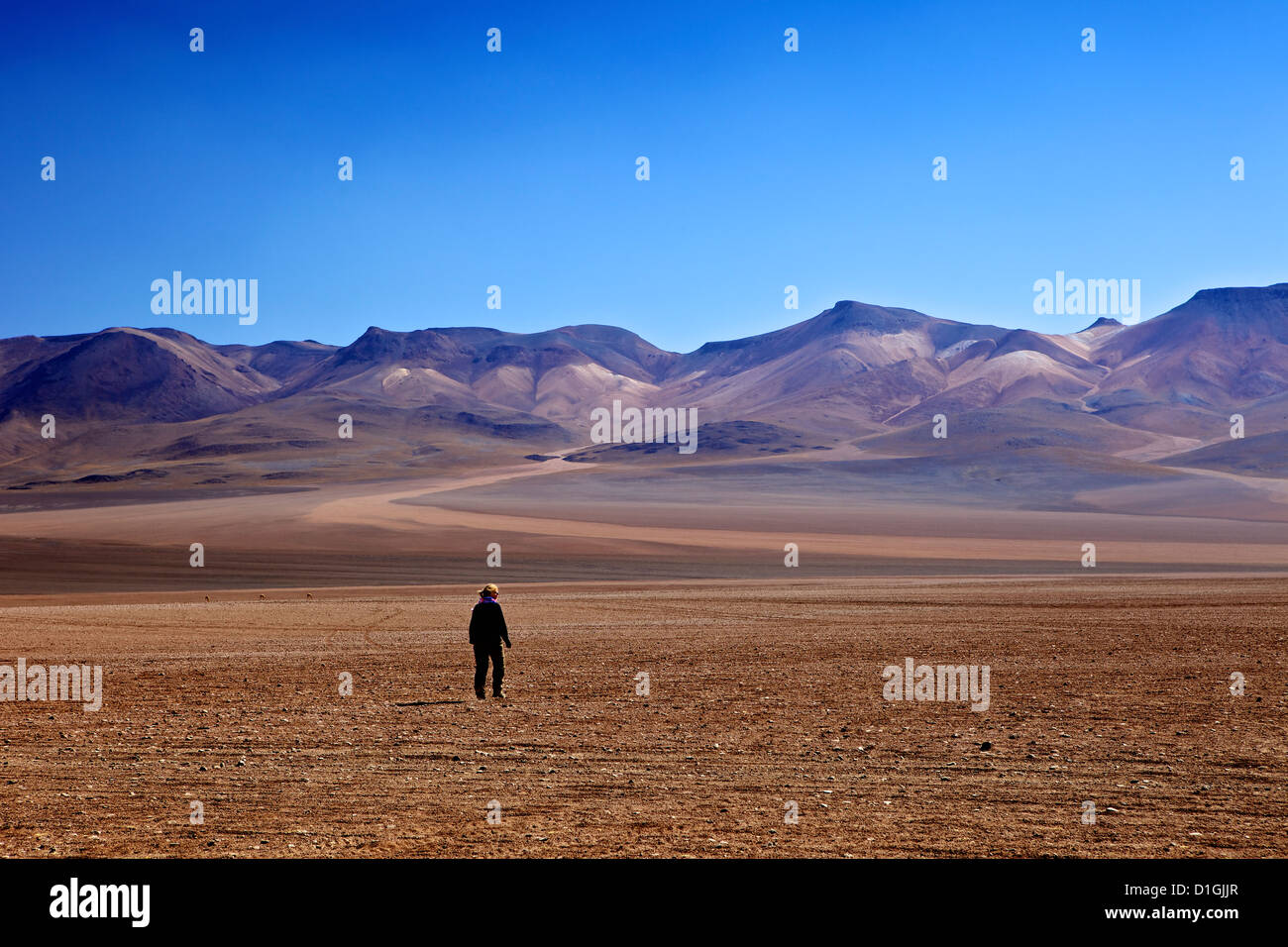 Desert in the Avaroa Andean Fauna National Reserve, Bolivia, South America - Stock Image