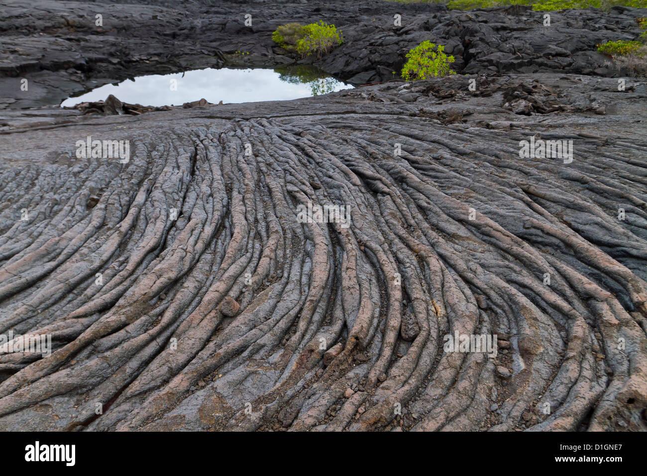 Lava flow, Fernandina Island, Galapagos Islands, UNESCO World Heritage Site, Ecuador, South America - Stock Image