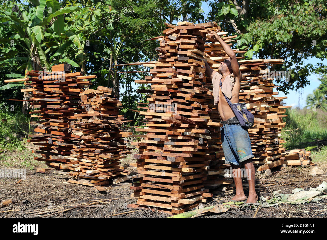 Man stacks firewood for sale, wastes from a sawmill in Madang province, Papua New Guinea - Stock Image