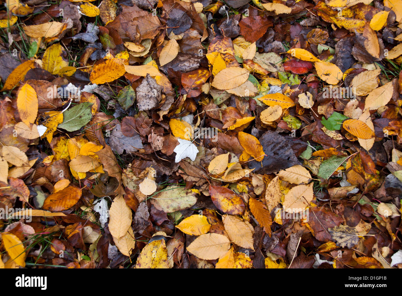Multicolor death and wet leafs like a background Stock Photo
