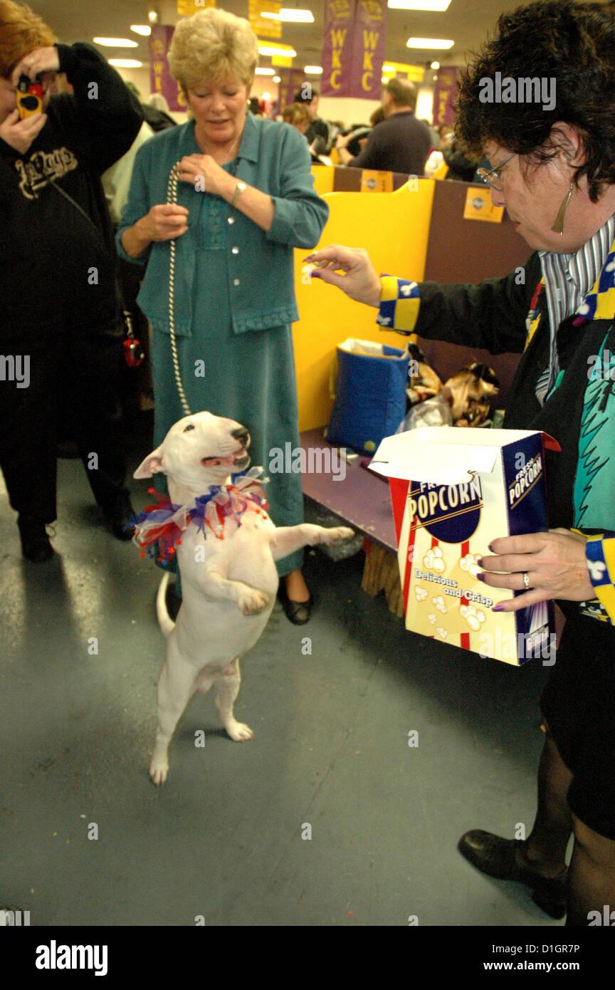 New York City, Westminster Kennel Dog Show, Madison Square Garden, Midtown Manhattan Stock Photo