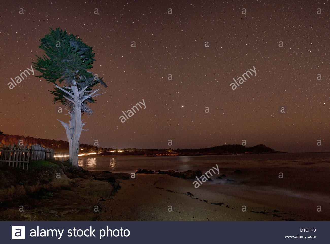 Monterey Bay with tree and night sky with stars, Monterey, California, United States of America, North America - Stock Image