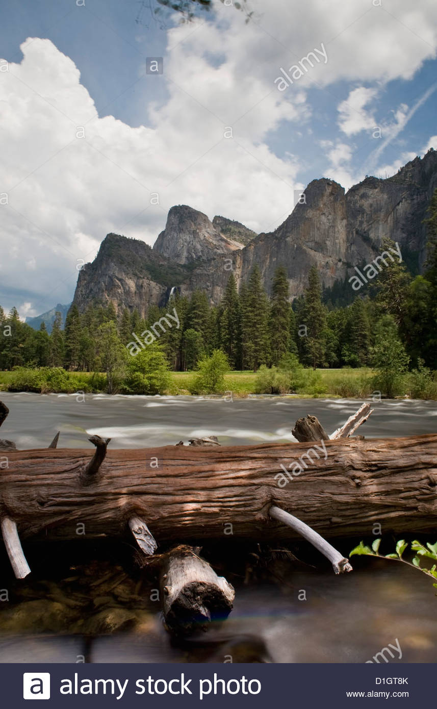 Tree in the river with mountains behind, Yosemite National Park, Yosemite, California, United States of America, - Stock Image