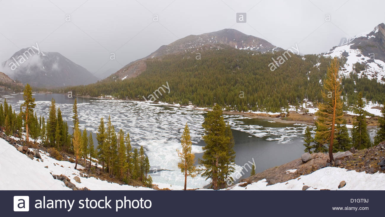 Mountains and trees during winter time, Yosemite National Park, Yosemite, California, United States of America, - Stock Image