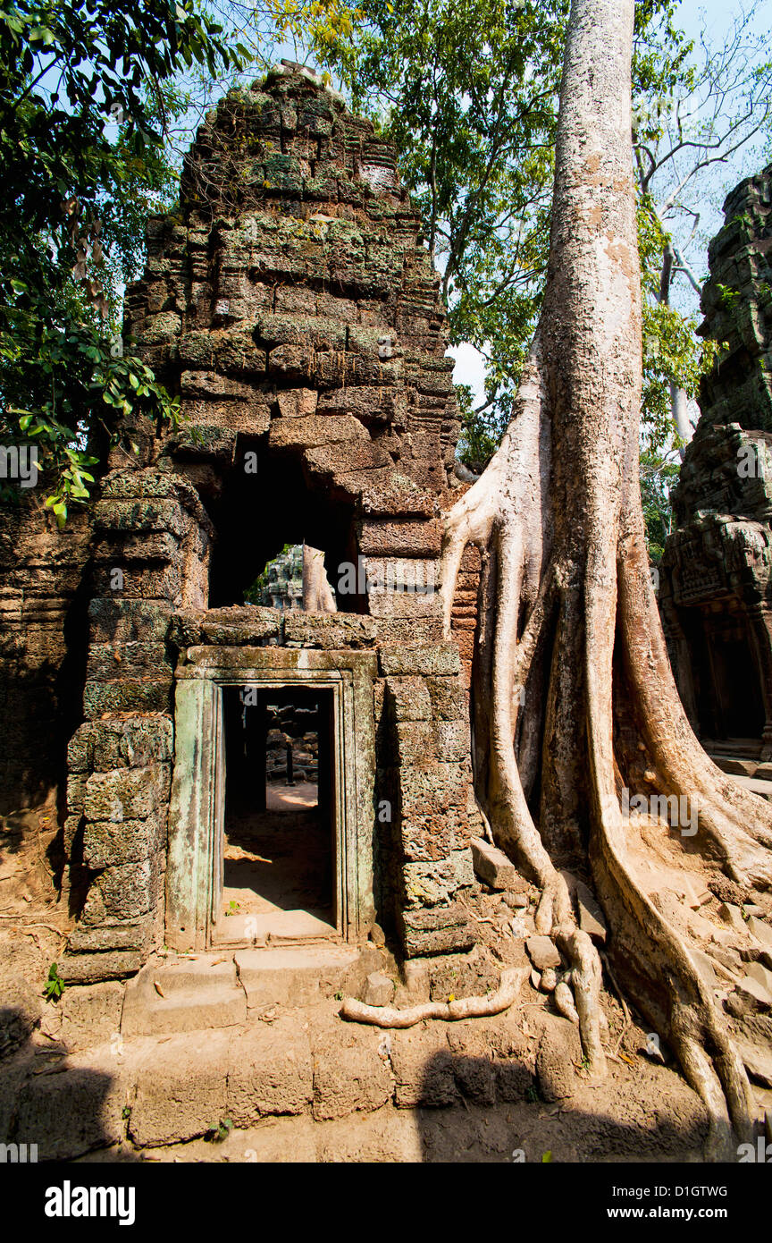 Overgrown roots and ruins at Ta Prohm Temple, Angkor Temples, Siem Reap, Cambodia, Indochina, Southeast Asia, Asia - Stock Image